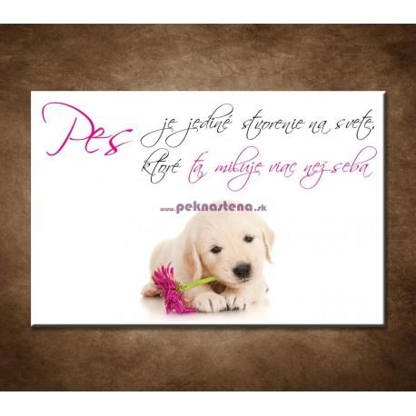 Obrazy na stenu - Pes je jediné stvorenie na svete,...