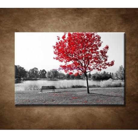 Obraz na stenu - Lavička v parku
