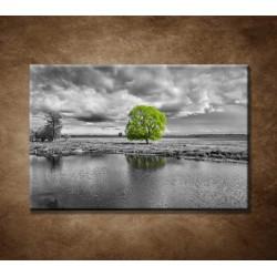 Obraz na stenu - Zelený strom