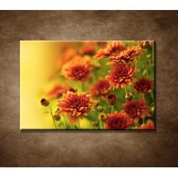 Jesenné chryzantémy