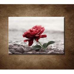 Obraz - Červená ruža na kameňoch