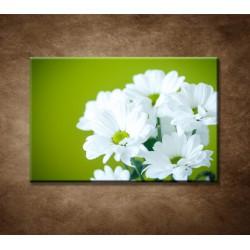 Obraz - Biele chryzantémy