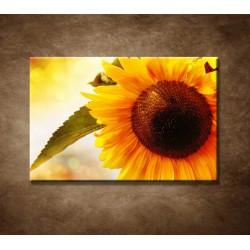 Letná slnečnica