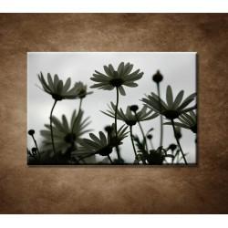 Obraz - Kvitnúca lúka