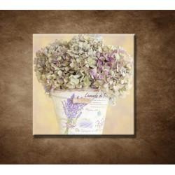 Obraz - Hortenzia v kvetináči