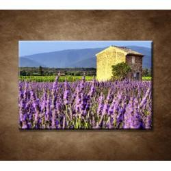Levanduľové pole v Provence