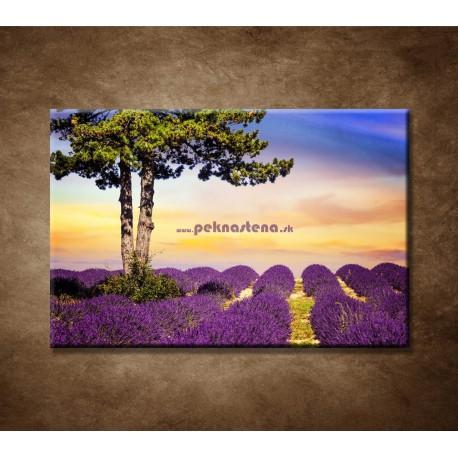 Obrazy na stenu - Strom medzi levanduľou