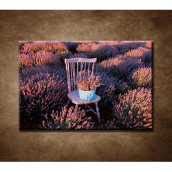 Obraz - Stolička v levanduľom poli