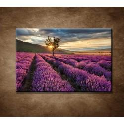 Obrazy na stenu - Východ nad levanduľou