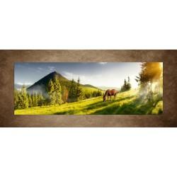 Obraz - Kôň na pastvine - panoráma