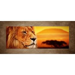 Obraz - Lev v Afrike - panoráma