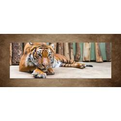 Obraz - Odpočívajúci tiger - panoráma
