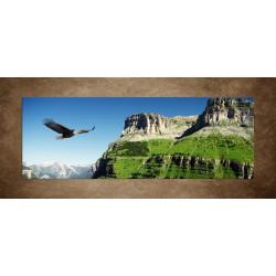 Obrazy na stenu - Orol