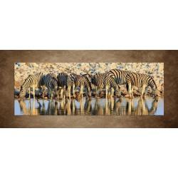 Obrazy na stenu - Pijúce zebry