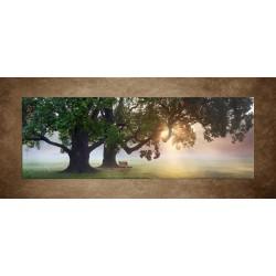 Obrazy na stenu - Lavička pod dubmi