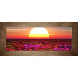 Obrazy na stenu - Farebné kvety pri západe - panoráma