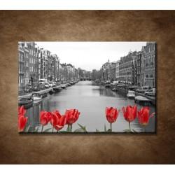 Tulipány v Amsterdame