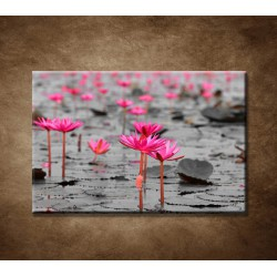 Obrazy na stenu - Lotosové pole