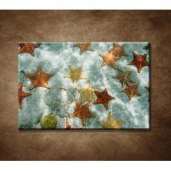Obrazy na stenu - Hviezdice
