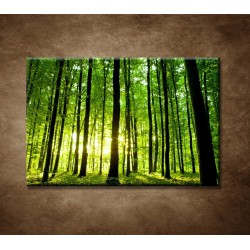 Obrazy na stenu - Zelený les