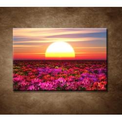 Obrazy na stenu - Farebné kvety pri západe