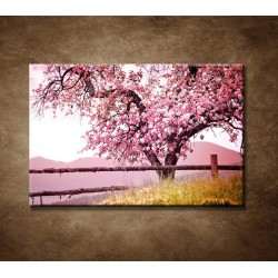 Obrazy na stenu - Strom čerešne