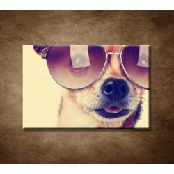 Obrazy na stenu - Pes