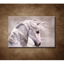 Obrazy na stenu - Šedý koník