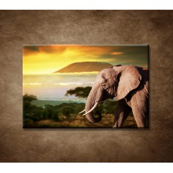 Obraz - Slon v Afrike