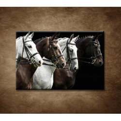 Obrazy na stenu - Štyri kone