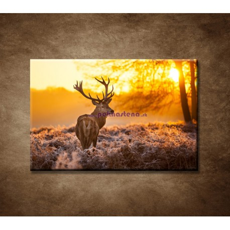 Obrazy na stenu - Jeleň