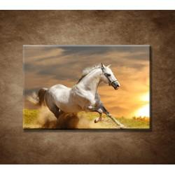 Obraz - Biely kôň pri západe