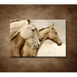 Obraz - Krásne kone