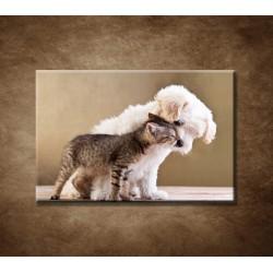 Obrazy na stenu - Priatelia