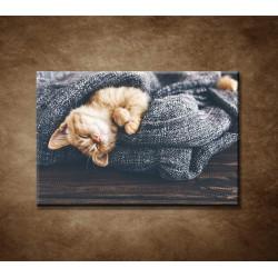 Obraz - Spiace mačiatko