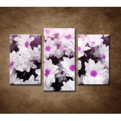 Obrazy na stenu - Biele kvietky - 3dielny 75x50cm
