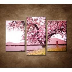 Obrazy na stenu - Strom čerešne - 3dielny 75x50cm