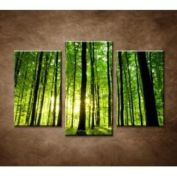 Obrazy na stenu - Zelený les - 3dielny 75x50cm