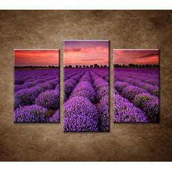 Obrazy na stenu - Krajina s levanduľou - 3dielny 75x50cm