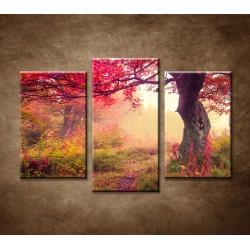 Obrazy na stenu - Jesenné stromy v lese - 3dielny 75x50cm