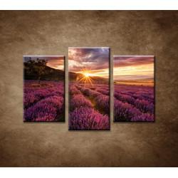 Obrazy na stenu - Levanduľové pole za úsvitu - 3-dielny 75x50cm