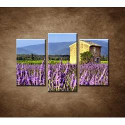 Obrazy na stenu - Levanduľové pole v Provence - 3-dielny 75x50cm
