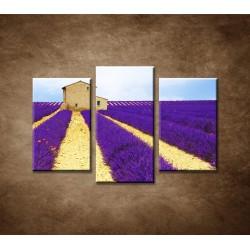 Obrazy na stenu - Kvitnúce levanduľové pole - 3-dielny 75x50cm