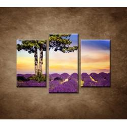 Obrazy na stenu - Strom medzi levanduľou - 3-dielny 75x50cm