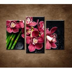 Obrazy na stenu - Bordová orchidea a bambus - 3dielny 75x50cm