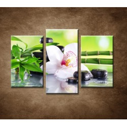 Obrazy na stenu - Bambusové vetvičky s orchideou - 3dielny 75x50cm