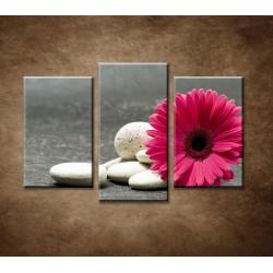 Obrazy na stenu - Ružová gerbera a kamene - 3dielny 75x50cm