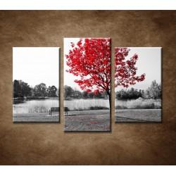 Obrazy na stenu - Lavička v parku - 3-dielny 75x50cm