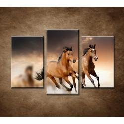 Obrazy na stenu - Hnedé kone - 3dielny 75x50cm