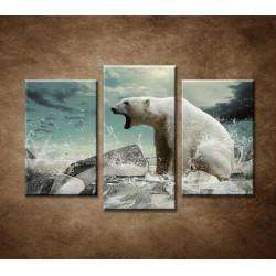 Obrazy na stenu - Polárny medveď - 3dielny 75x50cm